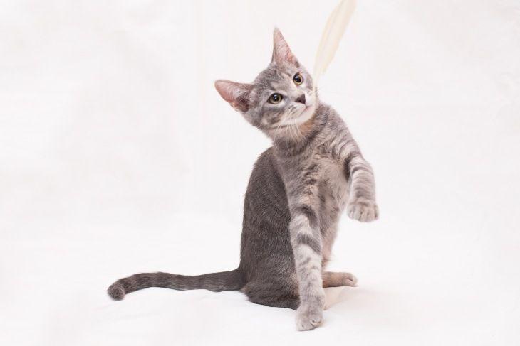 Котенок Пуша в добрые руки