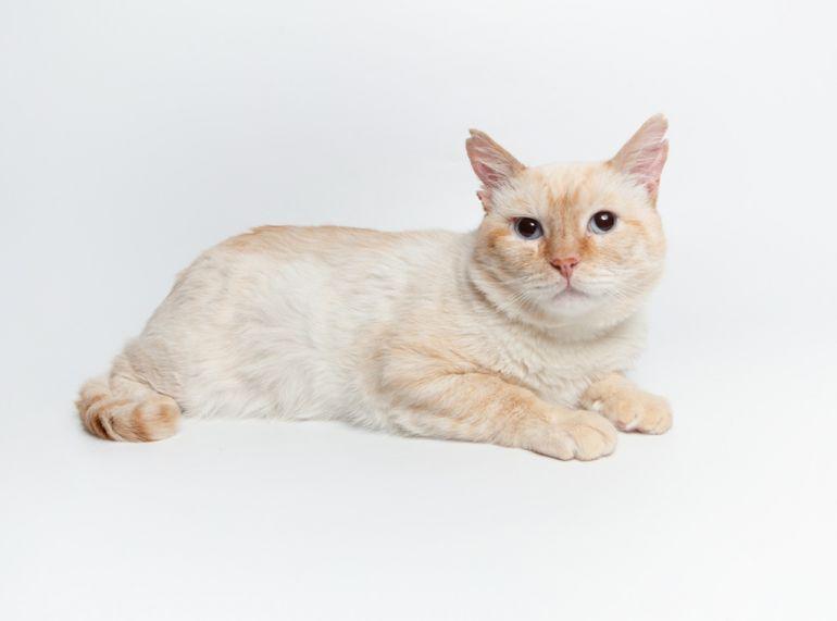 Ласковый котик Октовиан ищет дом!