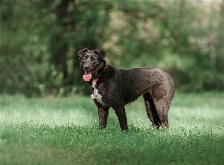 Чудесная собака Гретта в добрые руки.