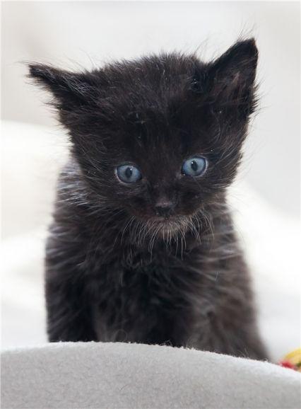 Милые котята разных окрасов ищут дом!