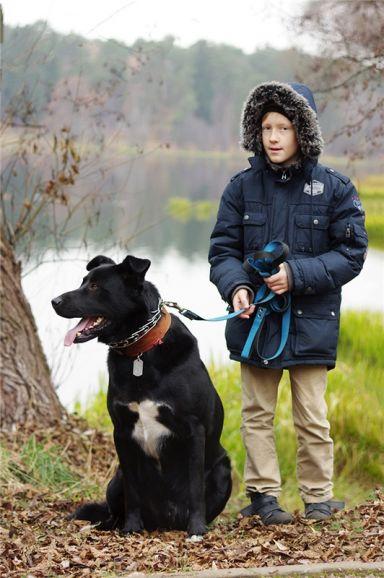 Крупный пёс Дамир в добрые руки.