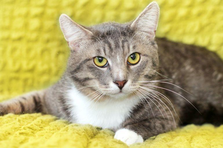 Кот с веселым и добрым нравом Мурчелло ищет дом