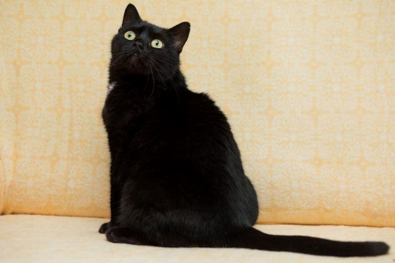 Очаровательная кошечка Аманда ищет дом.