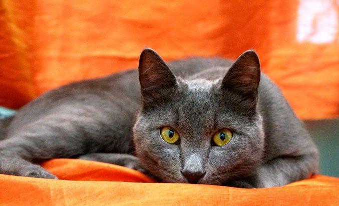 Дымок- очаровательный кот в добрые руки