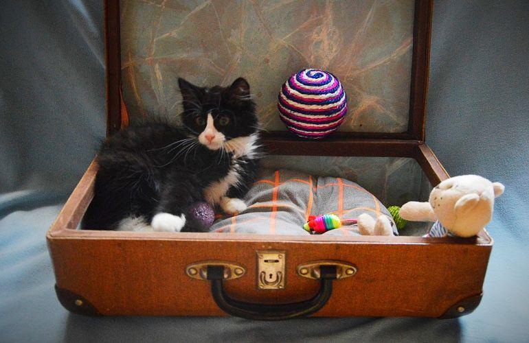 Чудесный котенок в дар
