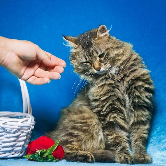 Молодая Кошка Кофе ищет дом