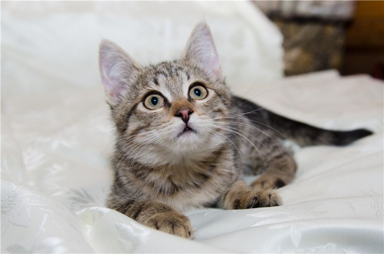 Котенок Сонечка в добрые руки!