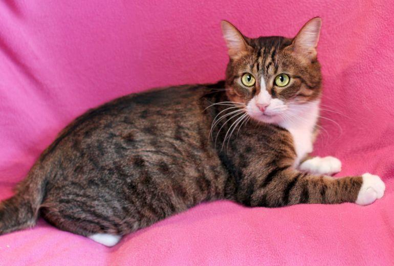 Молоденький котик Елисейка ищет дом!!