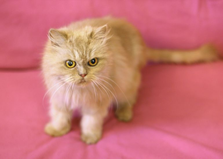 Кошка живущая в темноте, Перис ищет доброе сердце.