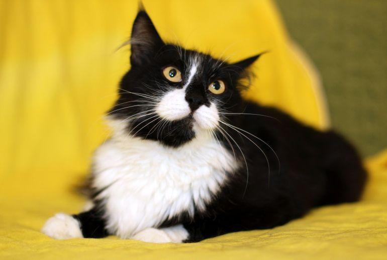 Мистер Мурчалкин, кот Морфей в дар.