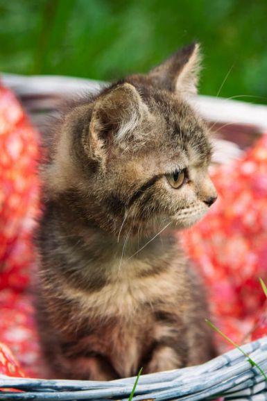 Великолепные котята в добрые руки