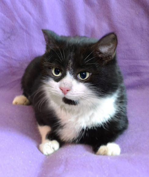 Молодой весельчак котик Тотошка в дар.