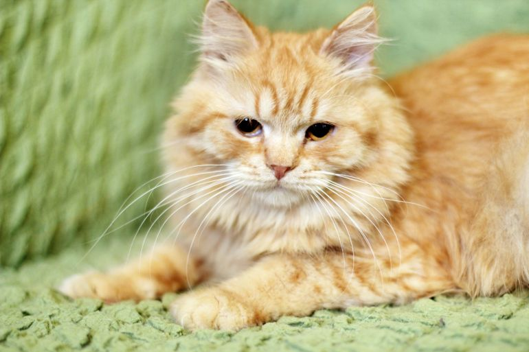 Котята Марципаны в дар добрым людям!