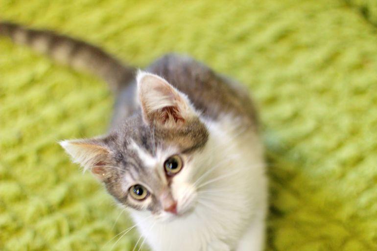 Котенок Муза ищет дом