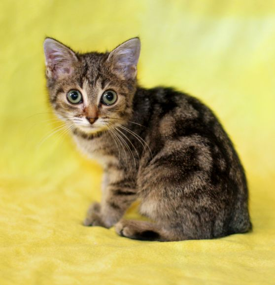 Само очарование котенок Зита в дар