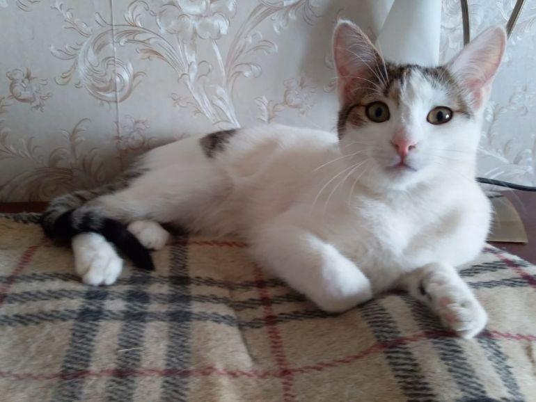 Бельчик, котенок ищет дом
