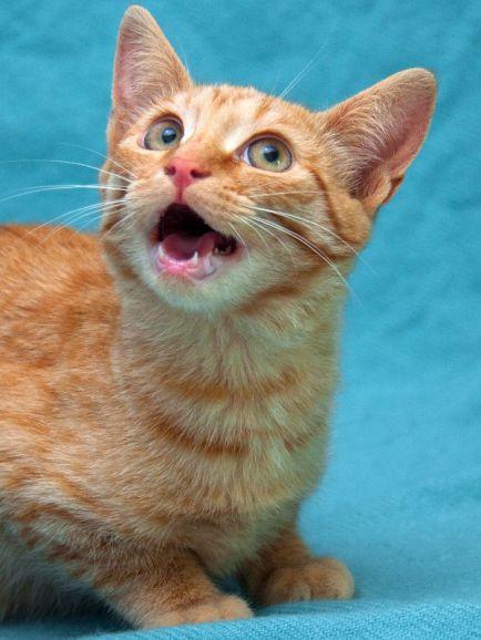 Рыжий котенок Бэмби