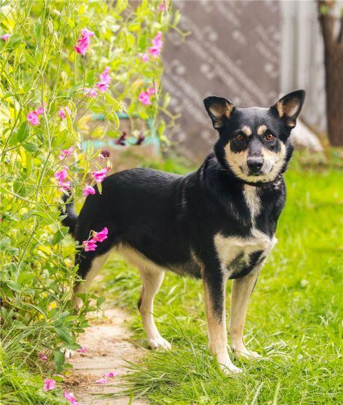 Чудесная собака Жулечка ищет дом.