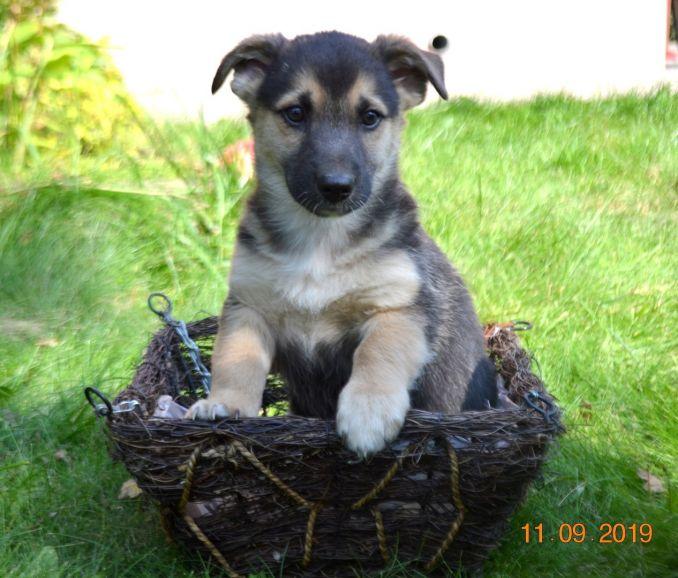 Милые бутузики-карапузики щенки ищут дом!