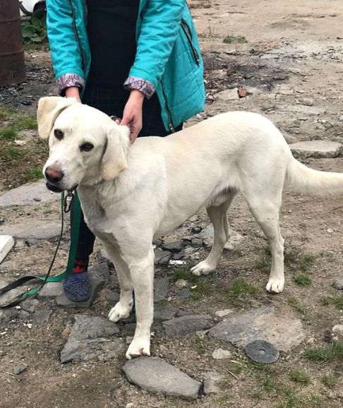 Замечательный  пёс Валет в добрые руки.