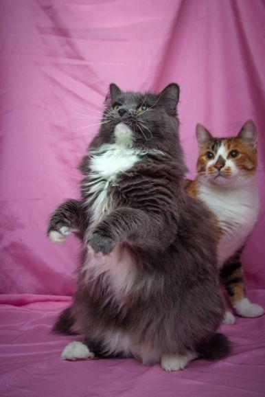 Три кошки необычайной красоты в добрые руки