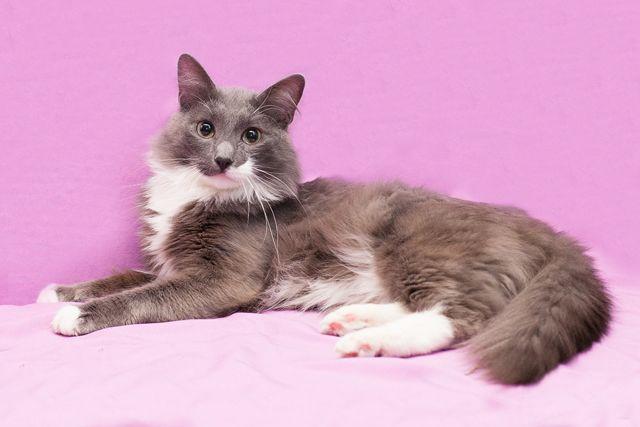Том – котик мечта, в добрые руки