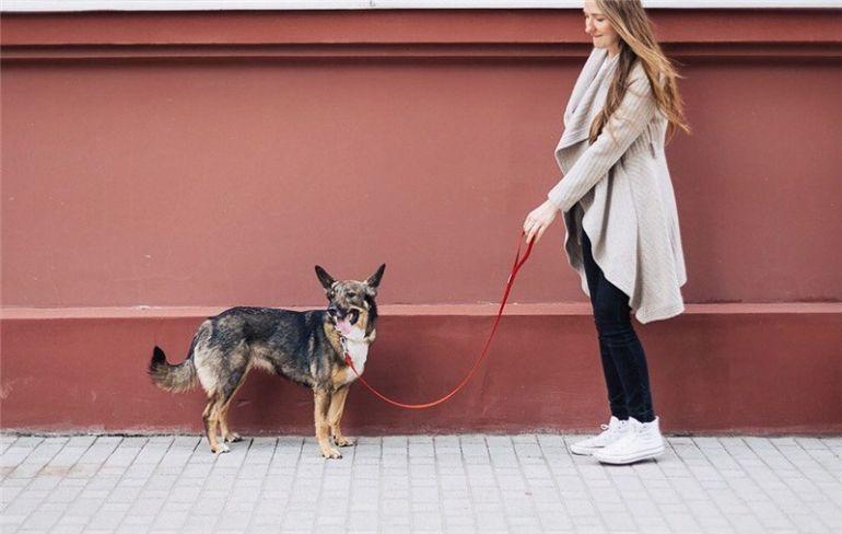 Собака-олененок ищет счастье