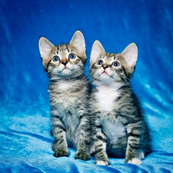 Два котенка в тельняшках в поисках дома