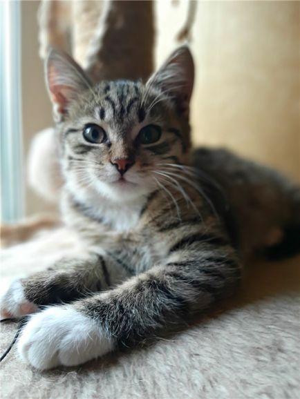 Котенок Матвей ищет семью