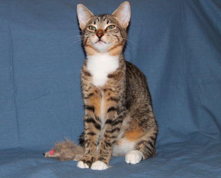 Полосатый кот Гоша в добрые руки