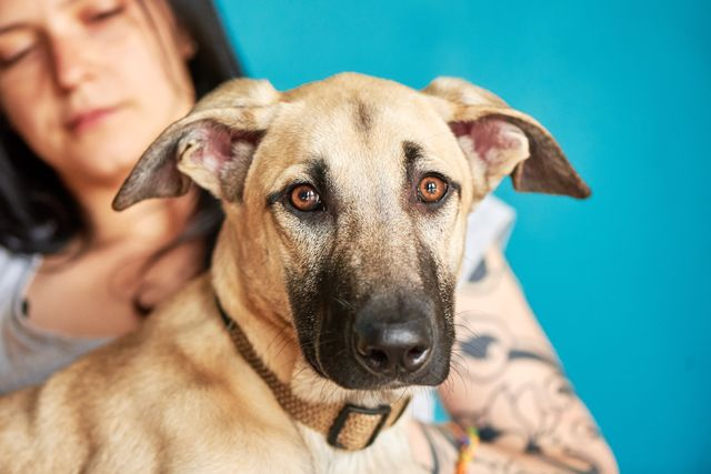Майк – игривый и общительный 7 мес щенок без вредных привычек. В дар!