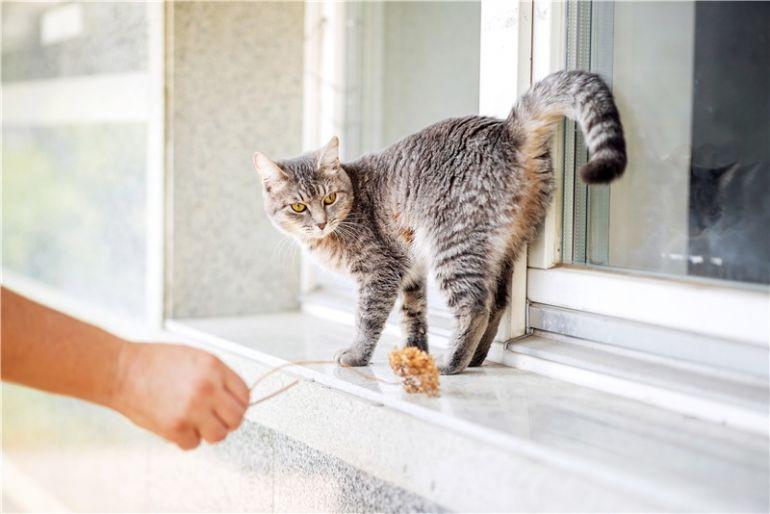 Очаровательная кошечка Туся ищет дом.