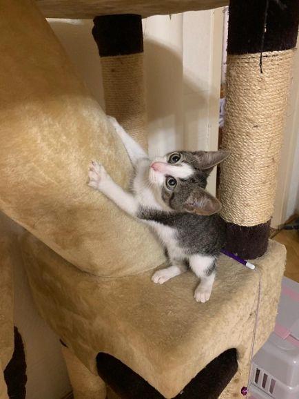 Котенок Смоу в добрые руки