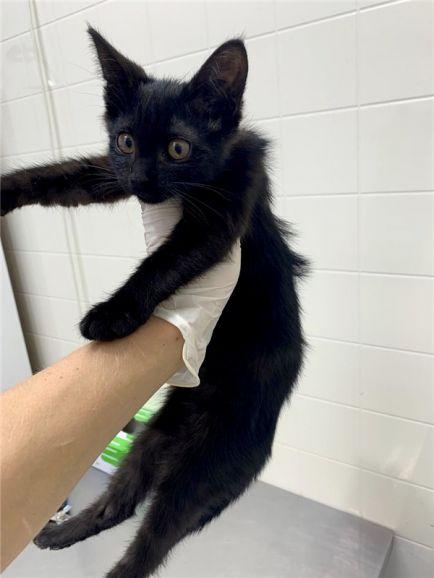 Котенок Пума в добрые руки.