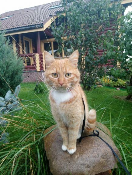 Ласковая кошечка Муся ждёт своего хозяина!