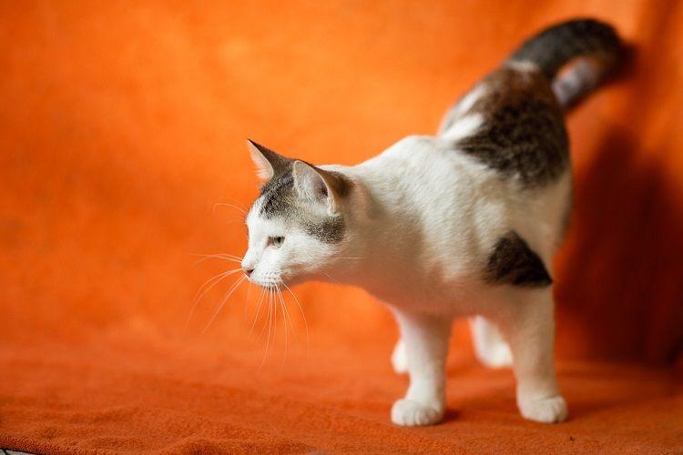 Ищет дом годовалый котик Макс.