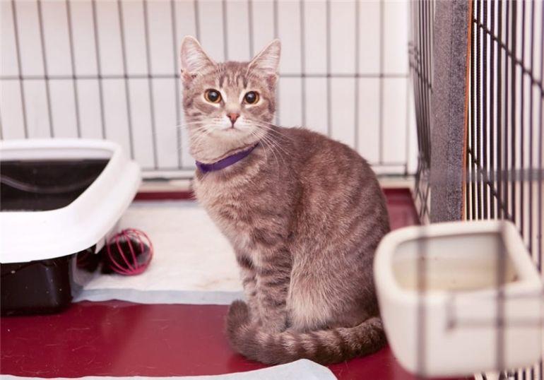 Трогательная и милая  кошечка Умка ждёт своего человека!