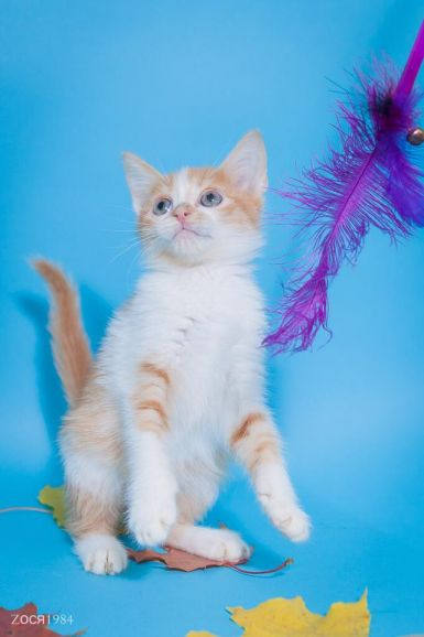 Котенок Валенок ищет хозяев