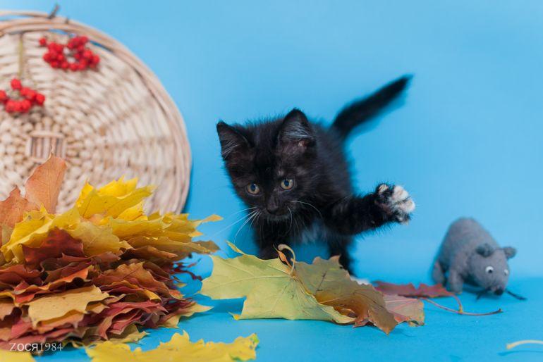 Мелкий забавный котенок Куся ищет дом.