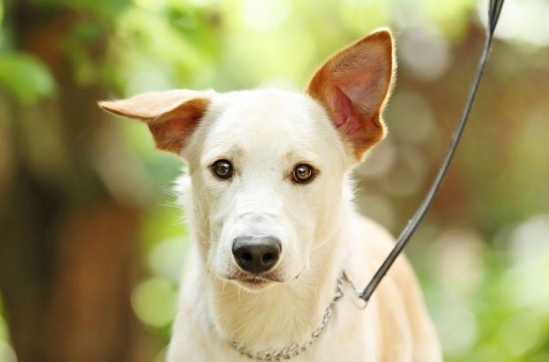 Прекрасный пес Лавр ищет дом! В дар!
