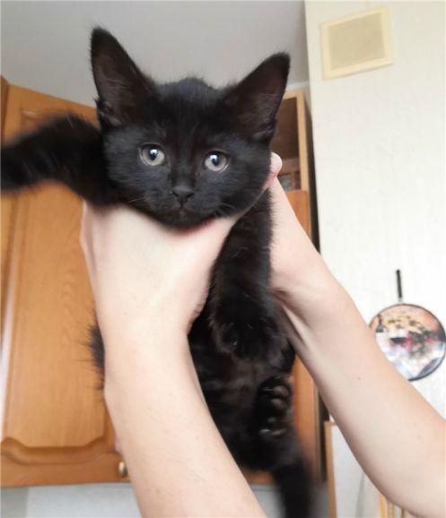 Три очаровательные котёнка в поисках любящего дома