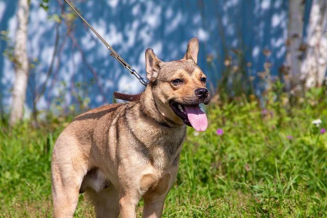 Некрупный пес Смайлик в добрые руки