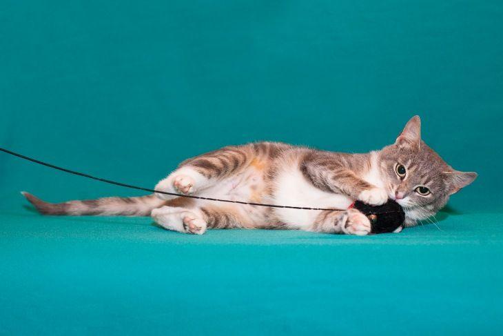 Кошечка Надин в добрые руки