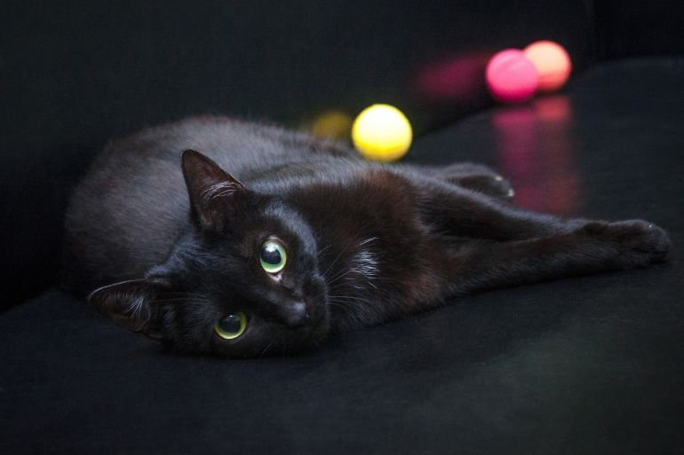 Многоликая котобогиня Багги, она же Габриэль, она же кошка Шанель, ищет свою семью!