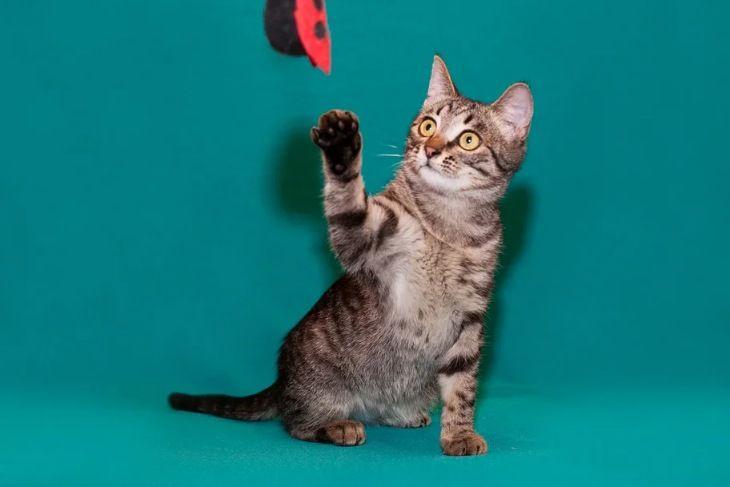 Котенок Аш в добрые руки