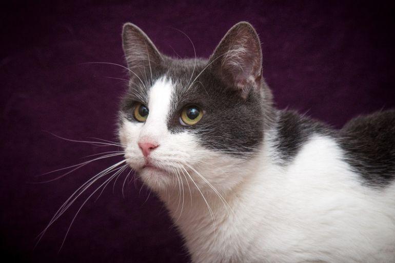 Котик Эшли ищет семью! В дар!