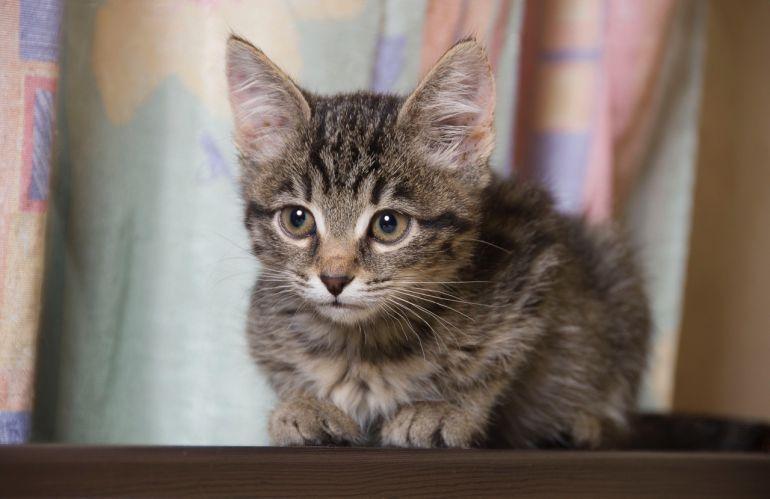Очаровательные котята-мальчики ищут дом!