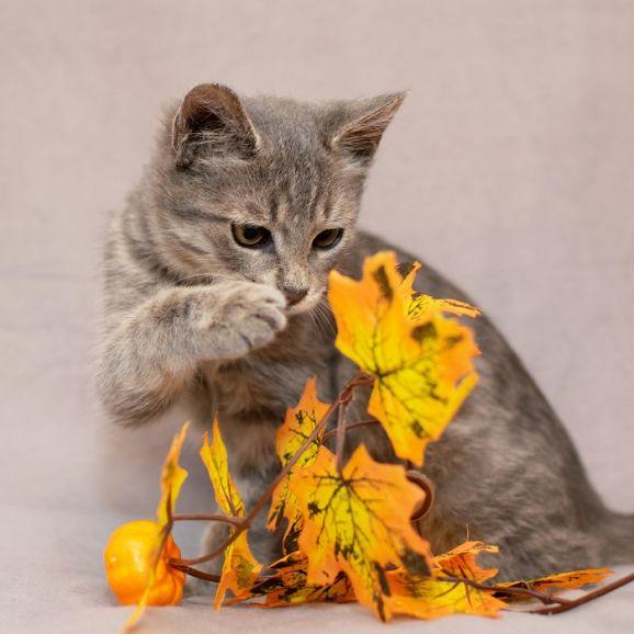 Котенок Сержик в поисках дома