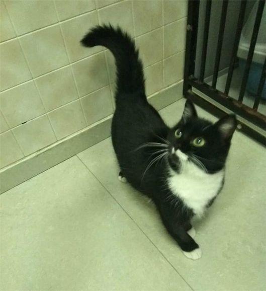 Очаровательный котенок- девочка ищет дом.