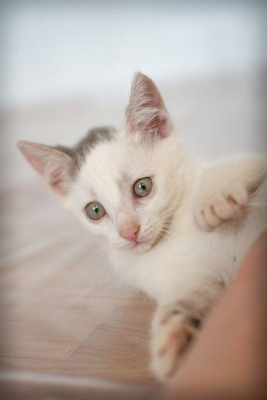 В добрые ручки чудесные создания! Отдам котят!